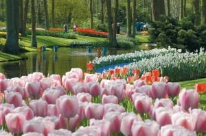 Keukenhof flower festival on the ferry to Holland
