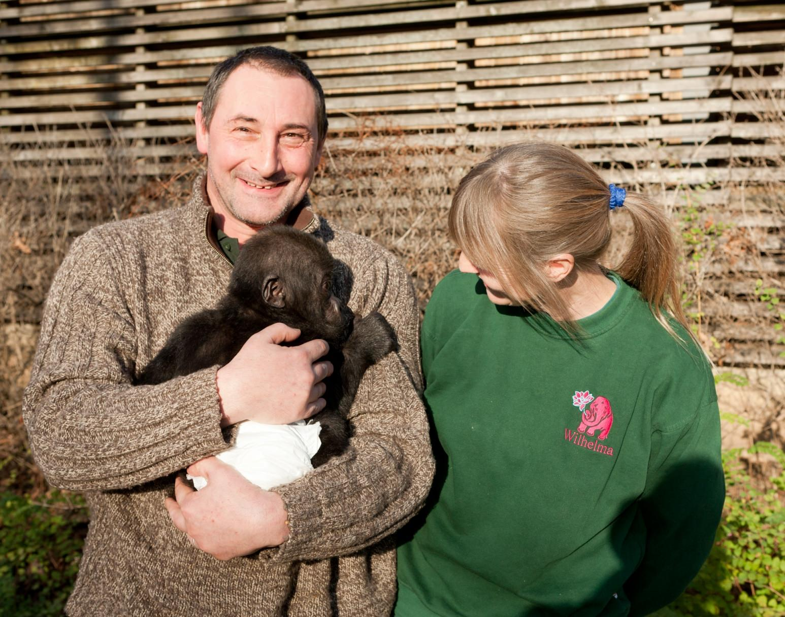 Baby gorilla travels to new home with Stena Line