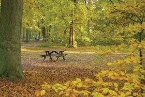City_park_Amsterdam_72dpi_1250x836px_E