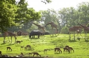 Dierenpark, Emmen