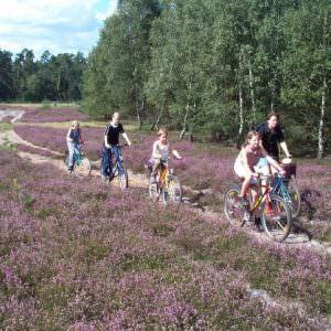 Luneberger Heide 1
