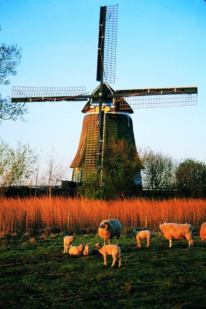 holland-autumn-5